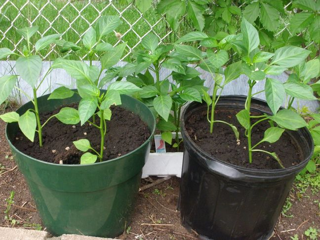 15 Best Vegetables That Grow Well In A Container Or Pot Food Pinterest The Smalls I Will