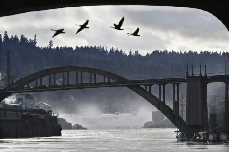 Oregon City's future springs from history | OregonLive. www.oregonlive.com1024 × 682Search by image View full sizeJon Givot/The Oregonian/2008The Arch Bridge between Oregon City and West Linn frames Willamette Falls.