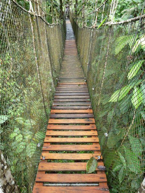 Suspension bridge for traversing dense jungle territory #AmazonAdventure #AtoZChallenge J: #Jungle walk to the #KapokCamp
