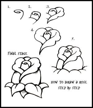 How To Draw flowers | Daryl Hobson Artwork: How To Draw A Rose: Step By Step Guide by darla