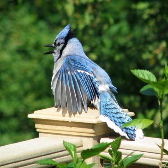 334 Best Blue Jays Images On Pinterest