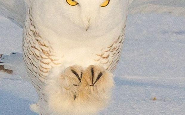 Εκπληκτικές φωτογραφίες από το χιονισμένο Κεμπέκ αναδεικνύουν την ομορφιά, αλλά και τη σκληρότητα της φύσης