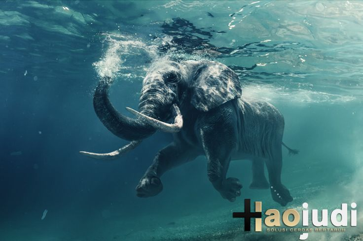 Seekor Bayi Gajah Seberangi Sungai Demi Selamatkan Pria Ini