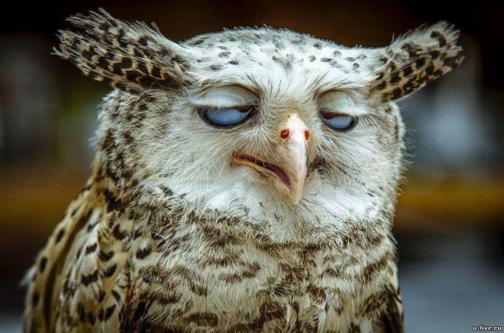 Утро понедельника тяжелое для всех живых существ. А для совы, как для ночного существа оно тяжело вдвойне.