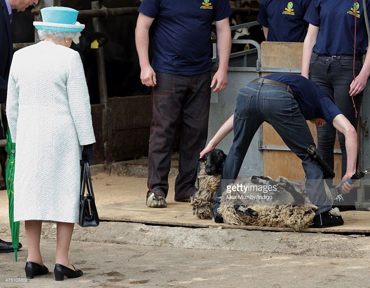Queen Elizabeth II, Duke of Lancaster watches a sheep shearing demonstration as she visits Myerscough College on May 29, 2015 in Lancaster, England.