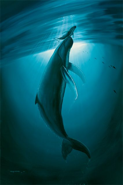 Wyland's First Breath. My most favorite Wyland piece ever.  When I saw it in the gallery for the first time I cried it just spoke to me so loudly.