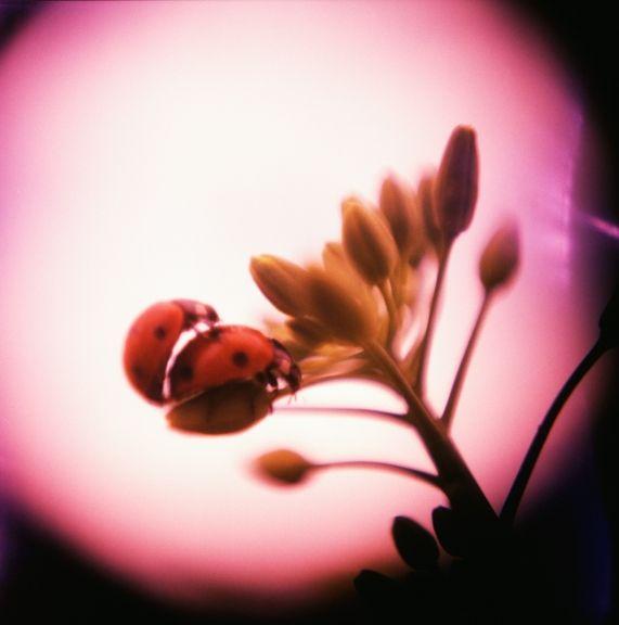 Love macros!Ladybugs