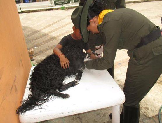 Perritos callejeros son atendidos por nuestros carabineros. Ellos son parte de nuestro #CompromisoDeCorazón  (@PoliciaColombia) | Twitter