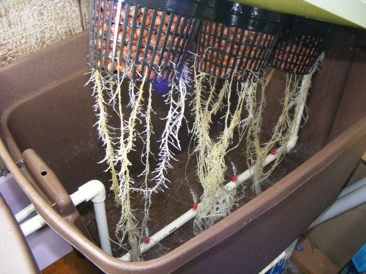 17 best images about aeroponics on pinterest aeroponic for Soil vs hydro