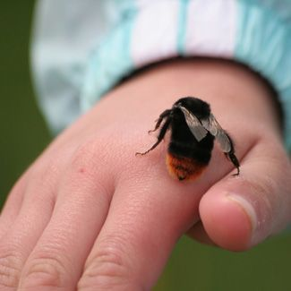 First Aid for Summer - bee stings, poison ivy, ticks, swimmer's ear, jellyfish stings