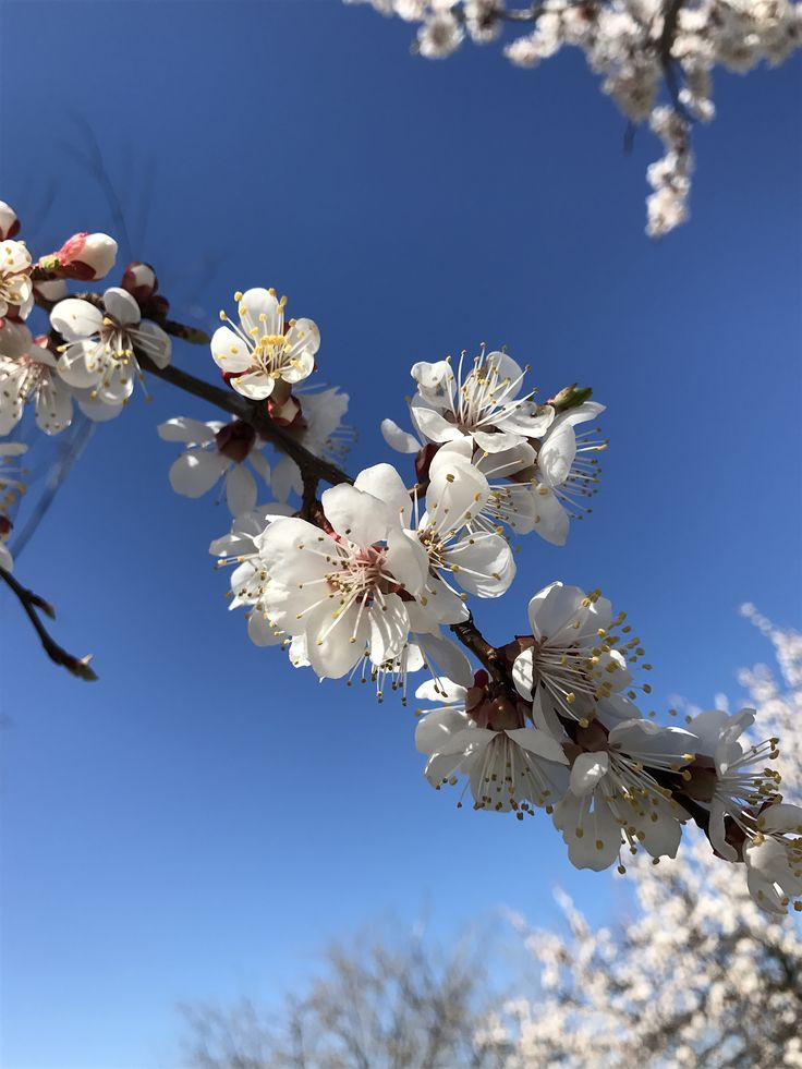 the beautiful blossom trees in spring sunny day #bloom #interestingworldroxi