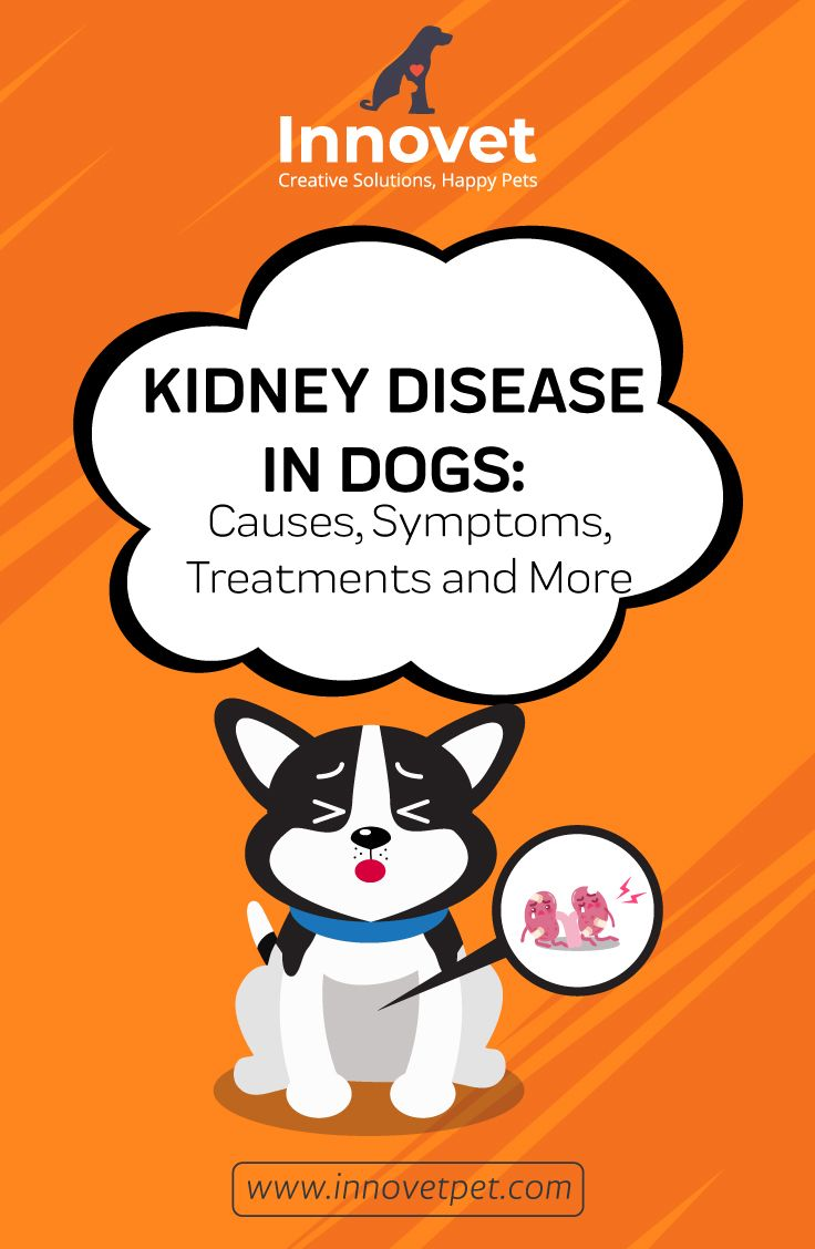 Kidney Disease In Dogs A Total Guide Kidney Disease Cat And Dog Memes Dog Help