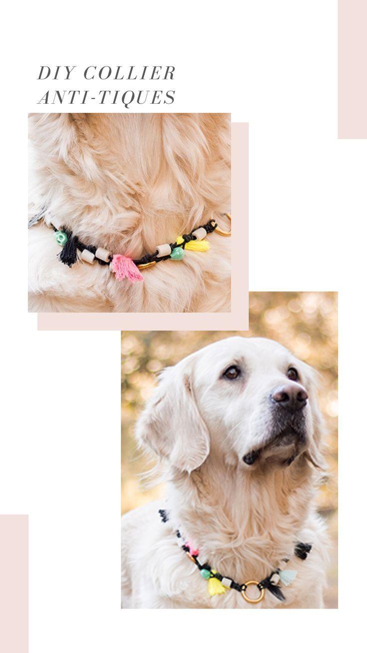diy collier pour chien