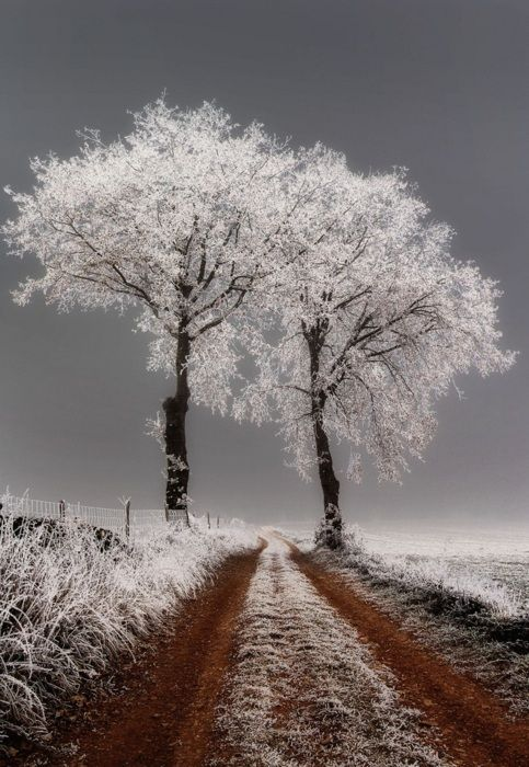Two trees with frost by Richard Giulielli - flickr: Photos, Country Roads, Paths, Winter Trees, Winter Wonderland, Beautiful, White Trees, Dirt Roads