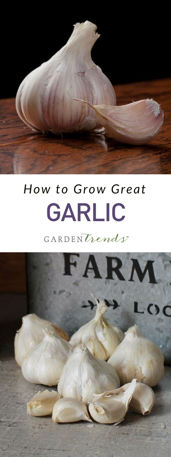 Interior designs medium size vertically growing onions growing onions - Because Garlic Is A Member Of The Allium Family Gardeners Who Grow Onions Can Easily