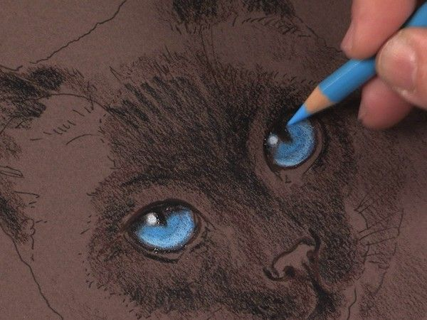 Colored pencil animals how to draw a cat