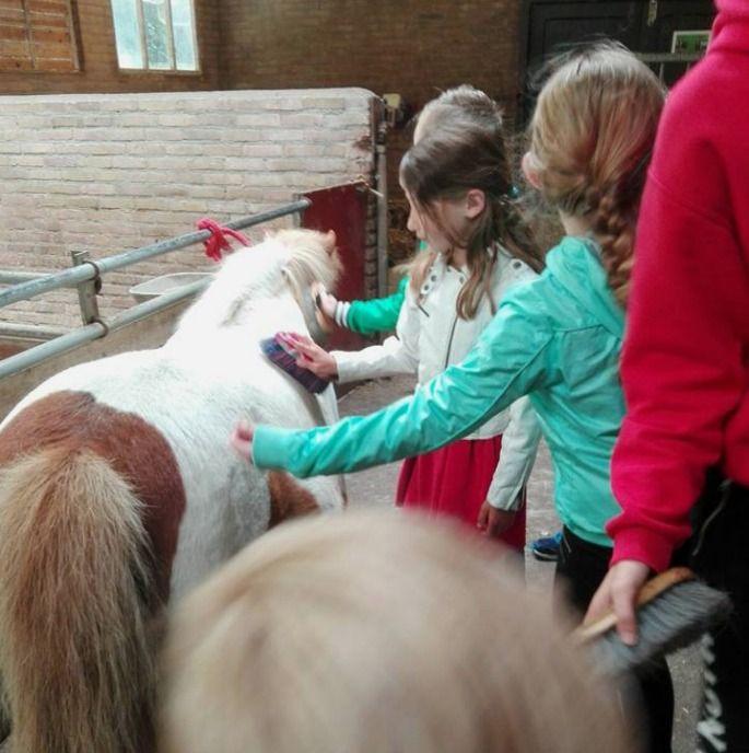 Sint Martinusschool Millingen aan de Rijn   Groep 4a ging dieren verzorgen in het Helicon in Nijmegen.