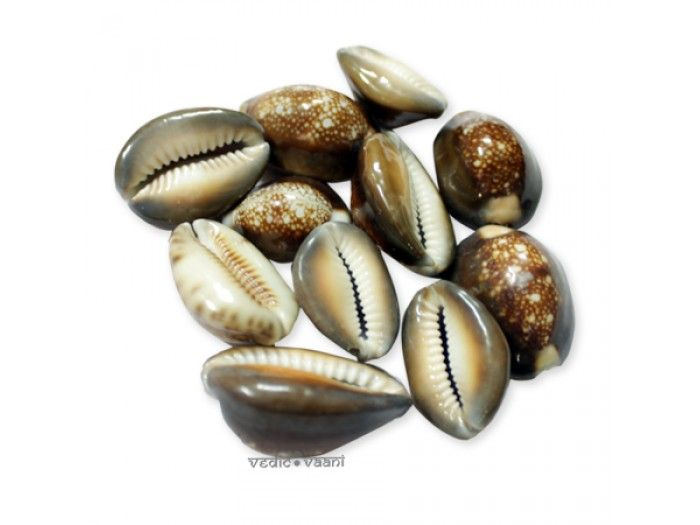 Purchase cowry shells online from the best online store from VedicVaani.com . The shells also represented a divine power,particularly from the mother Goddess, or spirit of the ocean