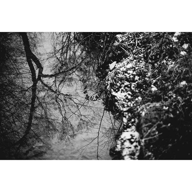 #thalersee #forest #nature #austria #travelgram #traveling #igers #landscape #mountain_world #visitaustria #instatraveling #discoveraustria #explore #water #reflection #winter #snow #instanature #naturephotography #myaustria #adventure #wandern #steyr #steiermark #ig_austria #blackandwhite #igersaustria #landscapephotography