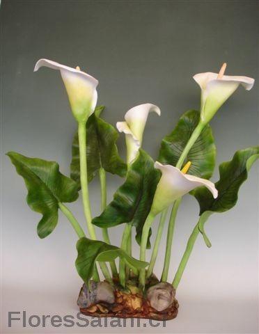 Calas   Flores Salahi