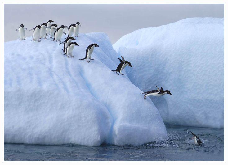 For my sister Karen --- who never did get the penguin joke!!