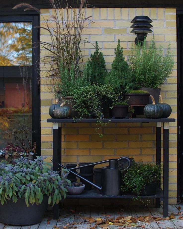 """2,654 gilla-markeringar, 50 kommentarer - Almbacken trädgårdsdesign (@mariapaalmbacken) på Instagram: """"Höstinspiration från förra året. Autumn inspiration from last year. #gardendesign #gardenispo…"""""""