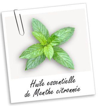 Huile essentielle de Menthe citronnée   - Bibliothèque - Aroma-Zone