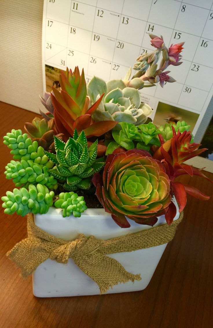 Succulent Arrangement For The Office Design By Ana