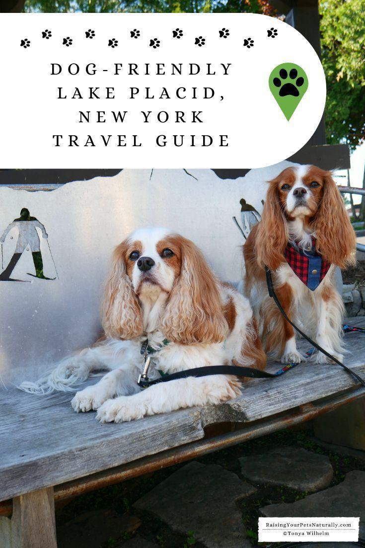 Lake Placid New York Pet Friendly Travel Guide Dog Friendly