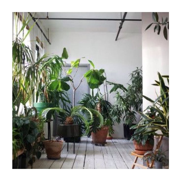 I want my own jungle plant room