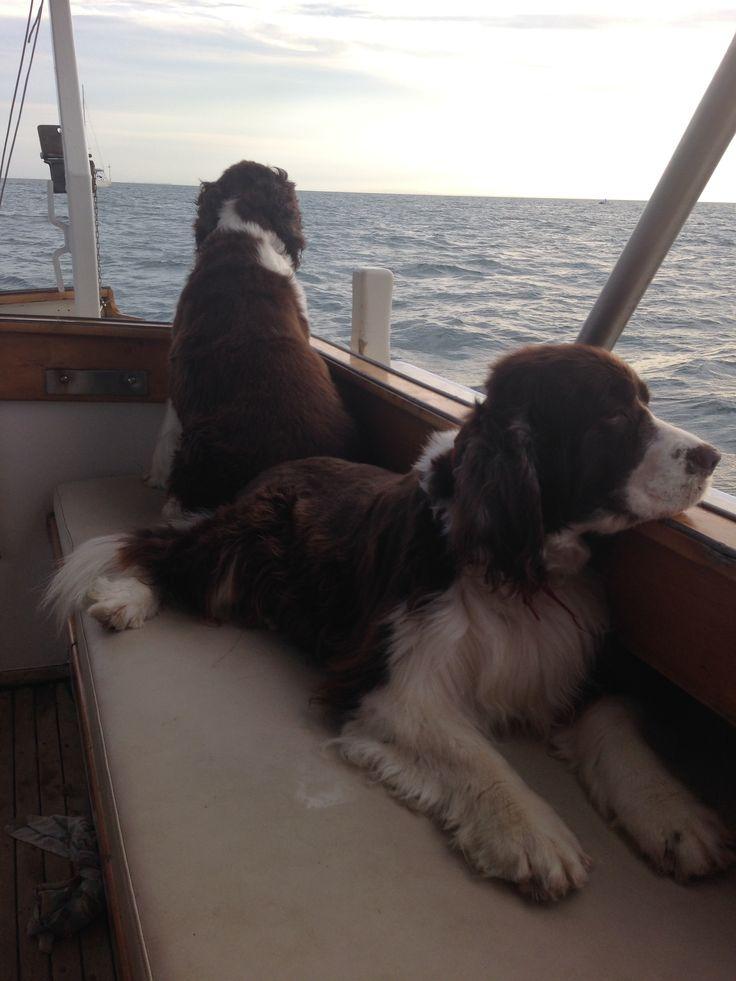Gertie and Molly keeping an eye on things #moretonbay #moretonisland