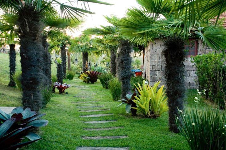 Junto às rústicas construções da Fazenda Bela Vista, em Itatiba (SP), a paisagista Paula Magaldi desenhou um caminho adornado com diferentes espécies de bromélias (Bromeliaceae) e palmeiras (Trachycarpus fortunei).  Fotografia: Divulgação.