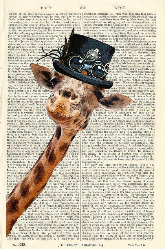 85 Best Giraffe