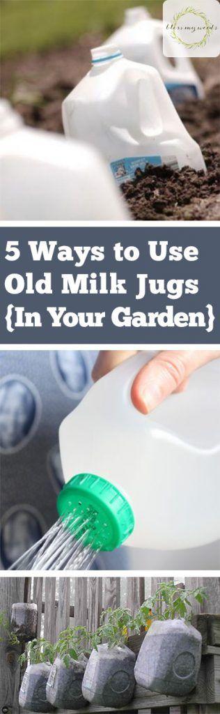 5 Ways to Use Old Milk Jugs {In Your Garden} - How to Use Old Milk Jugs, How to Repurpose Old Milk Jugs, Recycling Projects, Garden, Milk Jug Crafts, Milk Jug Gardening Tips, Popular Pin