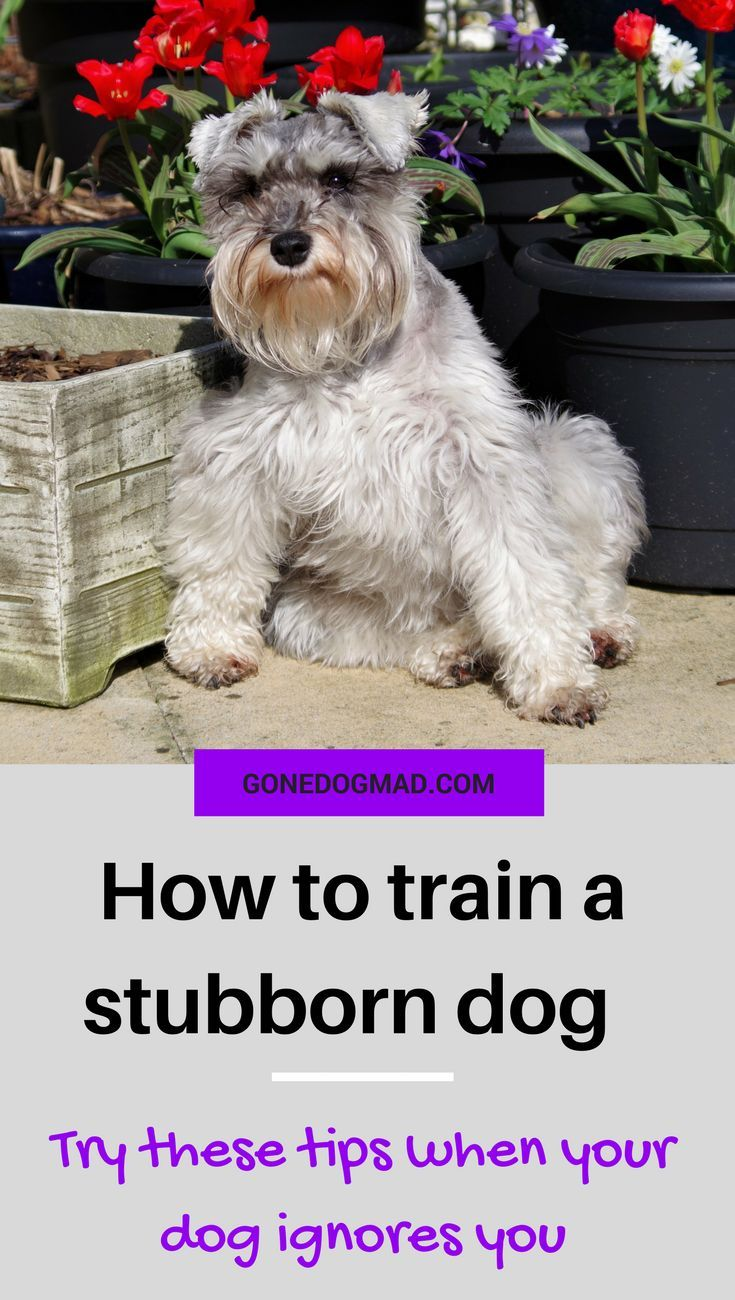 How To Train Dog To Listen To Commands