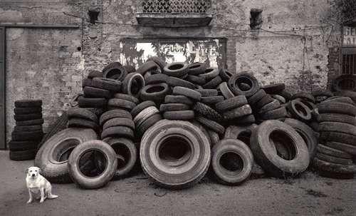 Pentti Sammallahti. Cilento, Italy (Dog and Tire Pile)