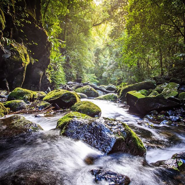 Become an intrepid explorer at Lamington National Park #thisisqueensland by @tyler_schluter
