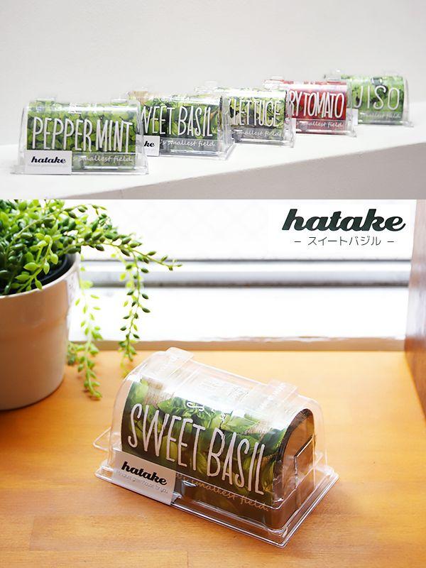 【楽天市場】hatake スイートバジル・ビニールハウスをミニチュアにデザインされた、かんたん卓上栽培キット:インテリア雑貨LUCCA