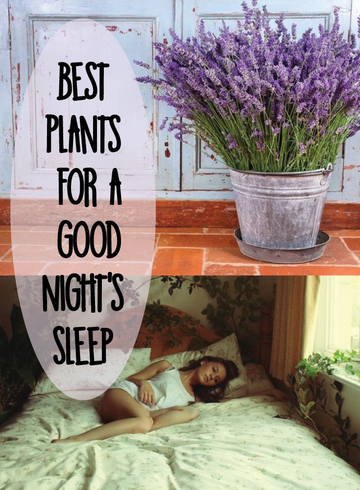 Best Plants for a Good Night's Sleep