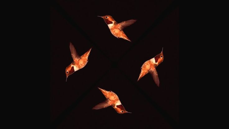 Hummingbird SloMo - Pyramid Hologram Screen Up [4K]