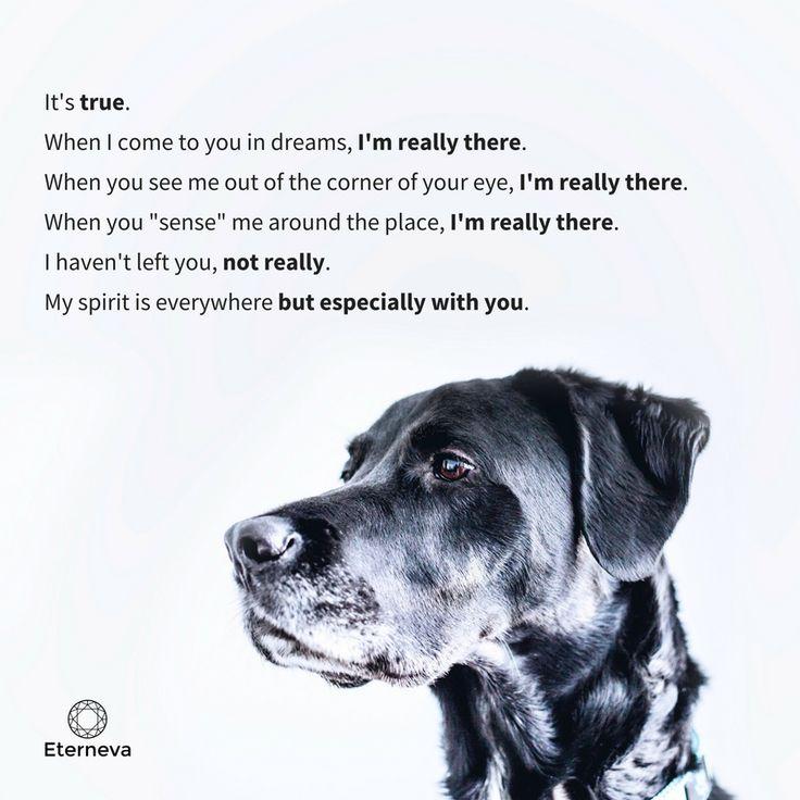 Mejores 27 imágenes de Pet Memorials en Pinterest   Cosas de perro ...