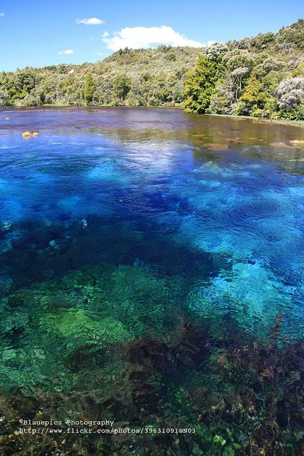 Takaka, Pupu Springs, New Zealand