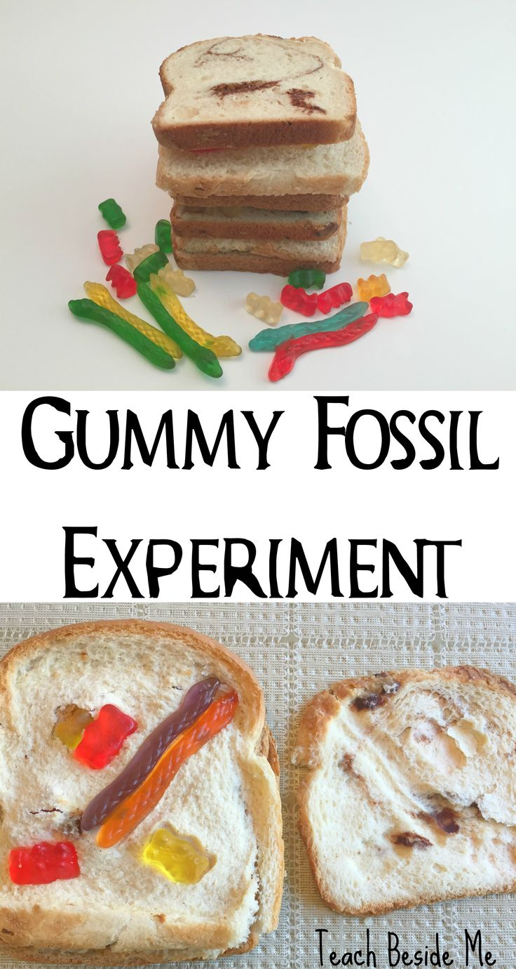 Try this fossil experiment made with bread and gummy worms!  teaches about sedim... 2