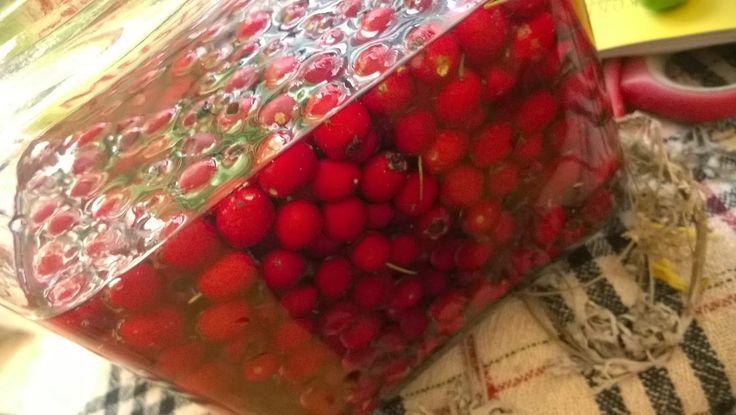 zielony stolik: Nalewka z owoców głogu.
