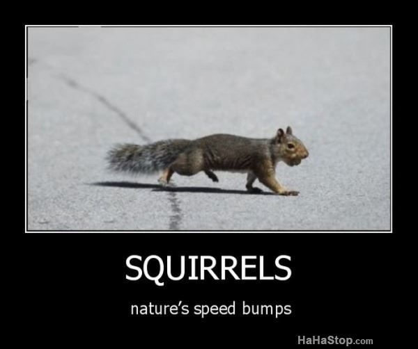 Best Funny Squirrels Images On Pinterest - Squirrel photographed in heroic pose becomes star of hilarious photoshop battle