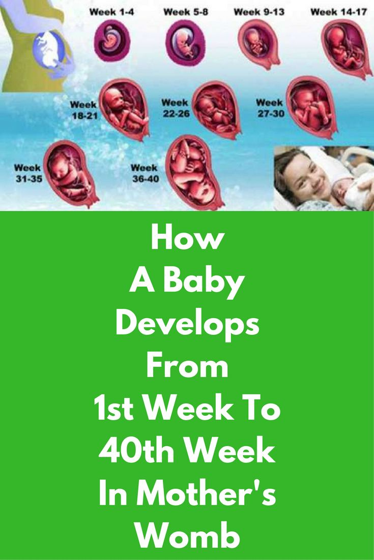 How A Baby Develops From 1 Week To 40 Weeks In Mother's Womb First Trimester First Trimester is very crucial for every pregnant woman as the risk of miscarriage is always there. First trimester serves as the sensitive period when fetus early development takes place. First month is all about mood swings and pregnancy symptoms, changes start in the fertilized egg. You miss your period and hormonal changes … #pregnancyfirstsymptoms