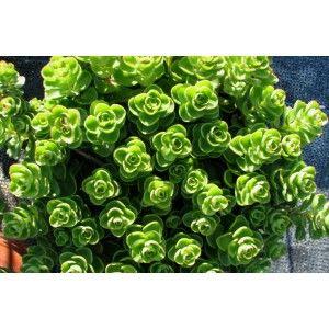 Plus de 1000 id es propos de les jardins de ma for Plante grasse exterieur rustique