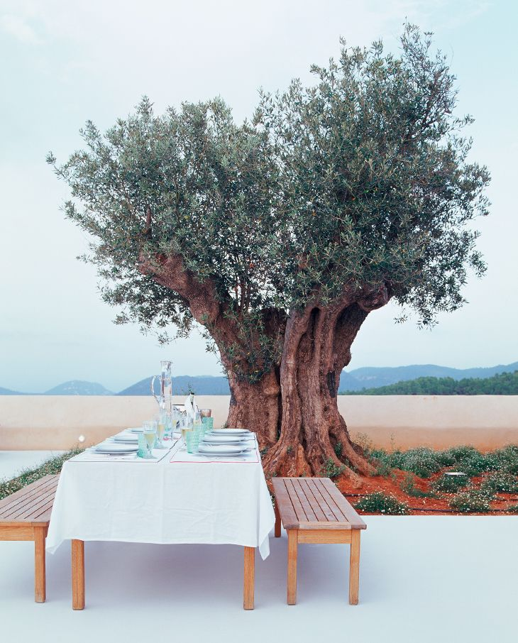 AN OLIVE TREE, IBIZA. MEDITERRANEAN STYLE DECORATING lets the sun floods the house. The landscape provides an atmosphere of joy to live. It is a relaxed and warm decor that conveys a sense of a little vacation.