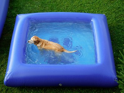 """""""The Ultimate Dog Pool"""", made from the same material the make river rafts out of so they can't be popped!"""
