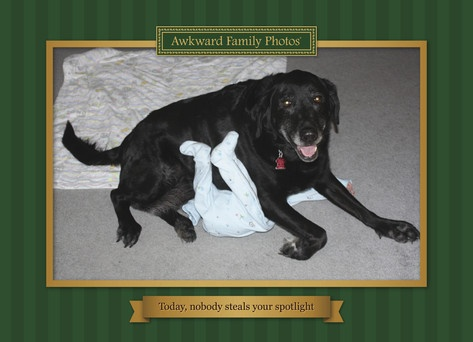 12 best christmas cards images on pinterest christmas cards cover up awkward family photos funny birthday card a dog blocks a baby bookmarktalkfo Choice Image